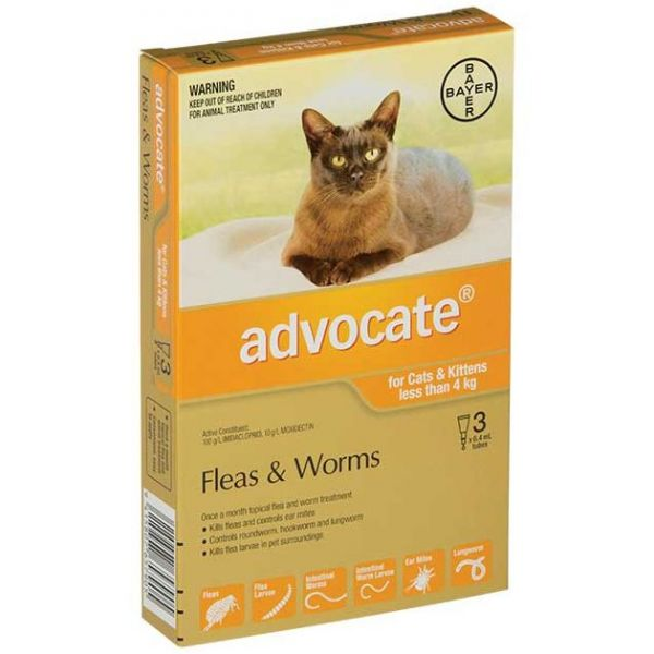 ADVOCATE Kittens/Small Cats