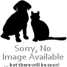 Bravecto  SPOT ON  solution for medium dogs (10-20 kg) green